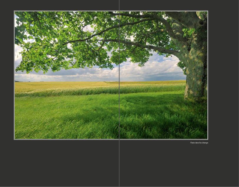 Portfolio de Philippe BOUSSEAUD «arbres»