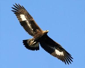 aigle 2