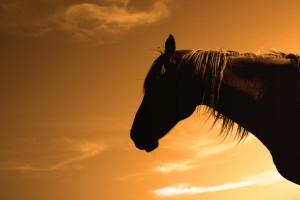 cheval sombre3sepia copie