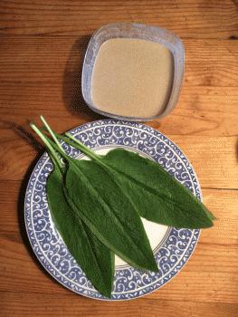 cuisiner la consoude, au bon goût de sole