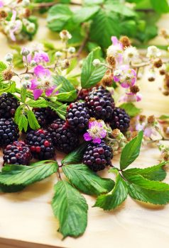 59915599 - flowering branches of blackberries on table